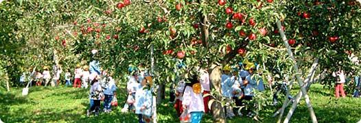 りんご狩り風景